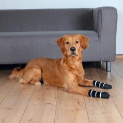 Chaussettes pour chiens