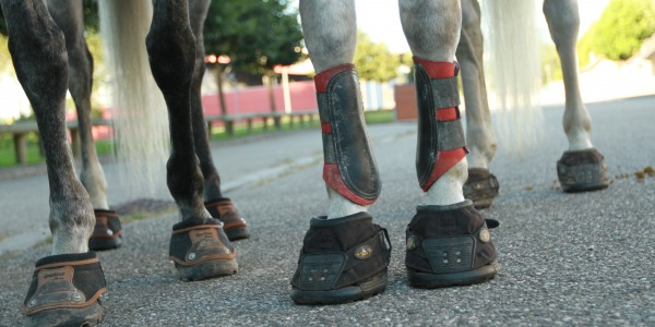 Which hoofboot for my horse, donkey, mule or pony?