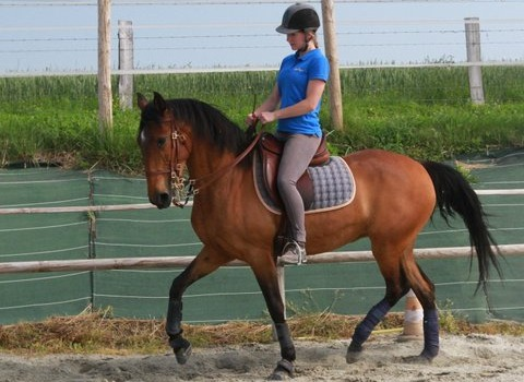 les hipposandales Glove en dressage