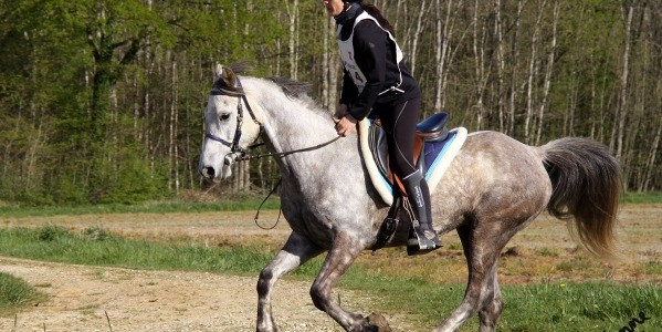 Pads in horse boots, why and how?