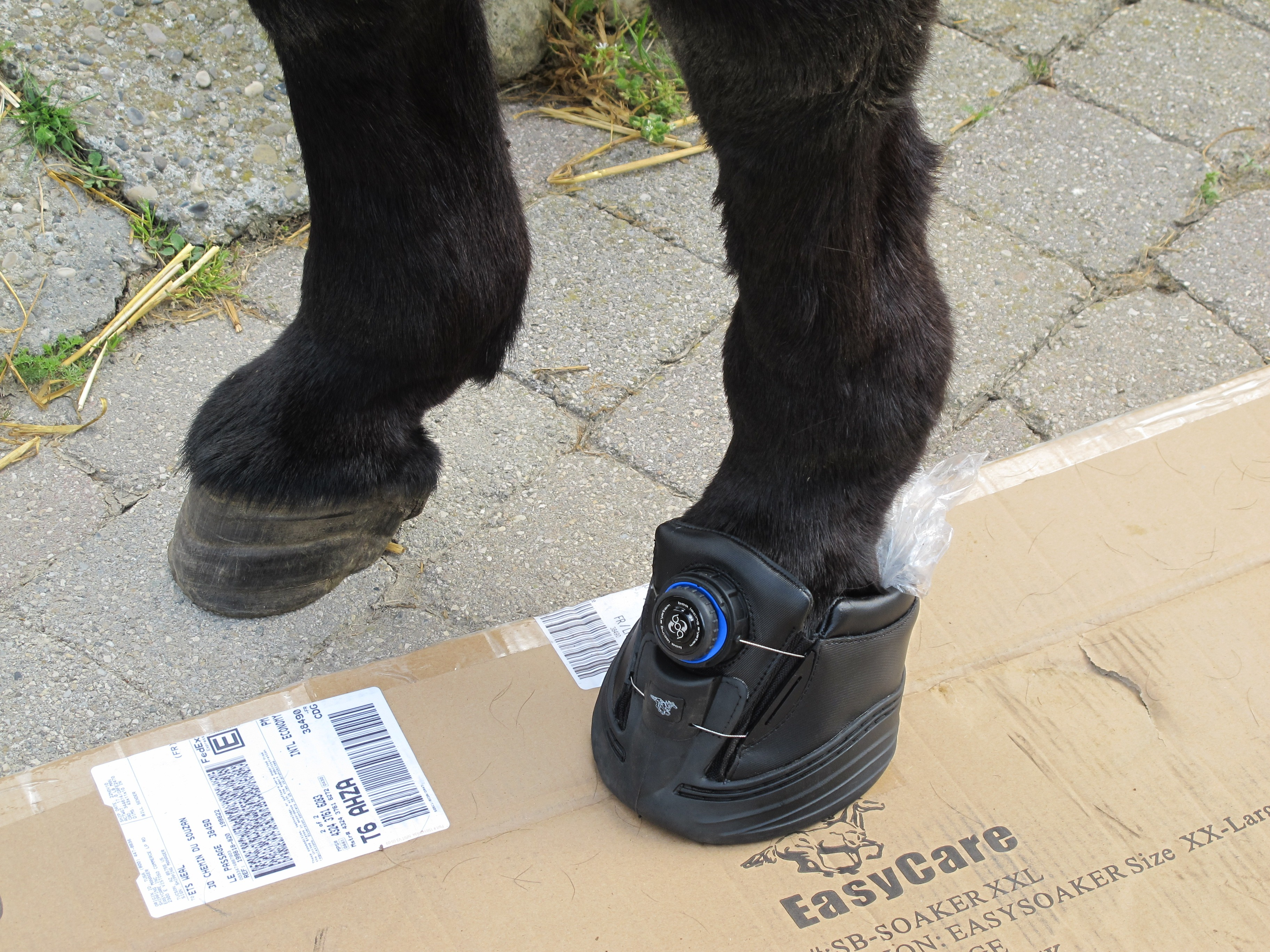 How to try a hoofboot you just bought?
